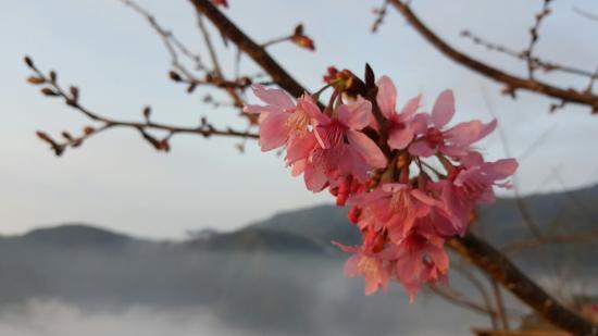 Bagua Tea House- Yongfu Chazhuang: 八卦茶圓-雍富休閒茶莊