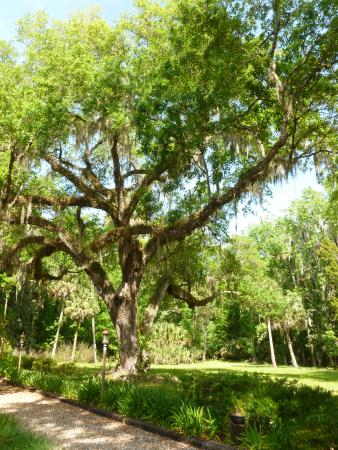 The Chassahowitzka Hotel: beautiful hotel grounds around the corner from a boat launch site