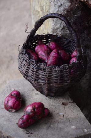 r colte de patates douces violettes fotograf a de bosque berl n bagua grande tripadvisor. Black Bedroom Furniture Sets. Home Design Ideas