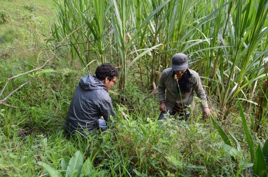Bosque Berlín: Recherches sur les espèces végétales locales pour préserver l'écosystème du bosque nublado