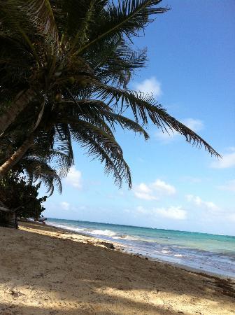Firefly Yoga & Massage: Strand beim Firefly
