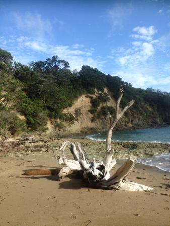 Fossil Bay Lodge: Beach