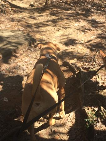 Pickens, Carolina del Sur: Table Rock State Park