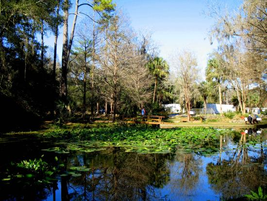 Ravine Gardens State Park Palatka Florida Picture Of Ravine Gardens State Park Palatka