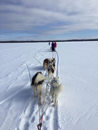 Wintergreen Dogsledding Lodge: Wintergreen Dogsled Lodge