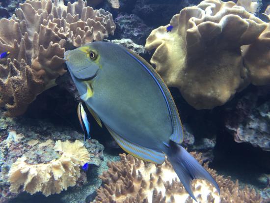 National Museum of Marine Biology and Aquarium - Foto di National ...
