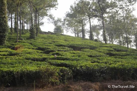 Bilde fra Mundakayam Ghat