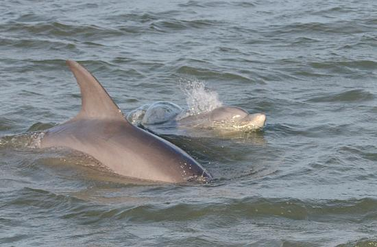 Kohootz Dolphin Encounters: Dolphin watching tour