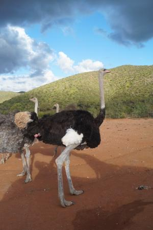 Carmens Guest House and Ostrich Farm Picture