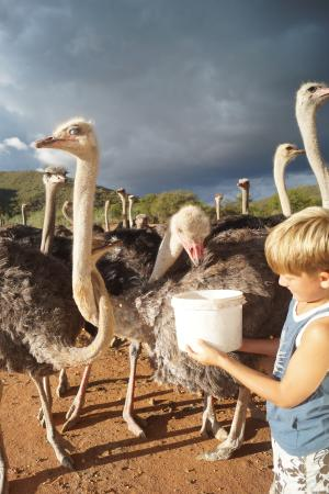 Carmens Guest House and Ostrich Farm Foto