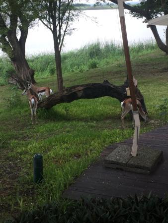 Mubanga Lodge: Breakfast visitors