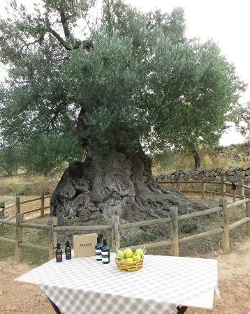 Identitat Extra Virgin Olive Oil: getlstd_property_photo