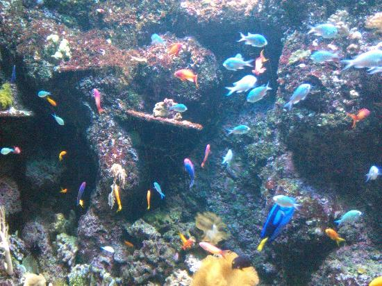 L'acquario con Nemo - Picture of Lido di Jesolo Sea Life ...