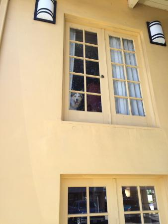 La Quinta Inn Waco University: Our Dog from the Suite Window