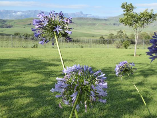 Парк Укхахламба-Дрейкенсберг, Южная Африка: Wake up to this