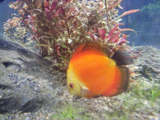 Foto de acuario inbursa ciudad de m xico variedad de for Acuarios para peces marinos