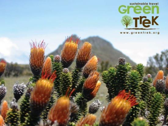 Greentrek - Day Tours