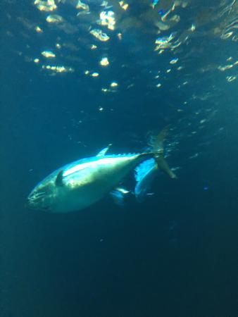 Monterey Bay Aquarium Picture Of Monterey Bay Aquarium