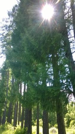 Arboretum Volga-Kama Biosphere Reserve
