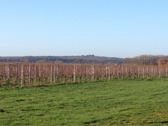 Wijngoed Avitera