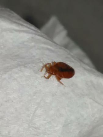 bed bug found at Island Drive Lodge