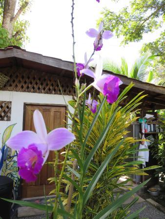 Cabinas Yamann: Blick auf Orchideen im Garten, Gemeinschaftküsche im Hintergrund