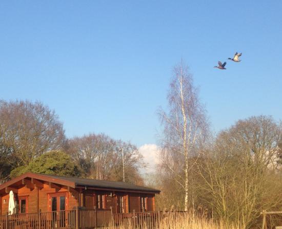 Badwell Ash, UK: Ducks Away!