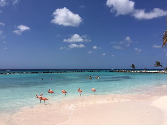 Renaissance Aruba Resort Private Island