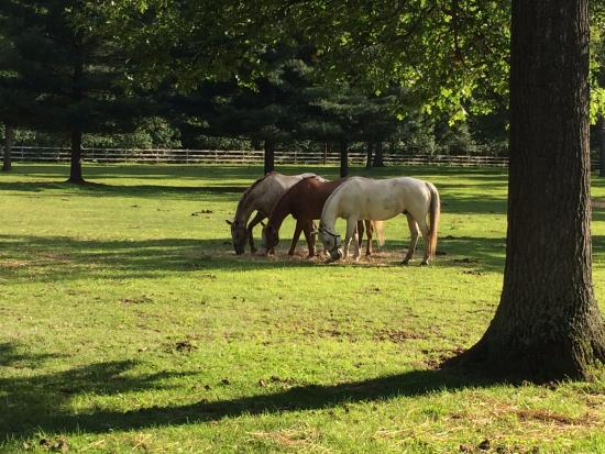 Baldwin, MI: Pasture with a few of the horses.