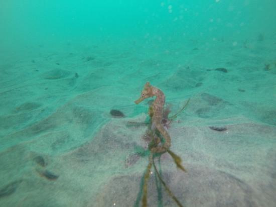 La Jolla Dive Image