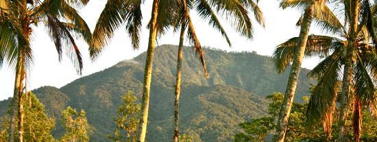 Sarinbuana Eco Lodge: Our mountain home