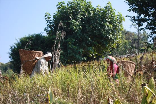 Annapurna Eco-Village: Villager tending the fields. Nepal is best known for farming rice, wheat & millet amongst many c