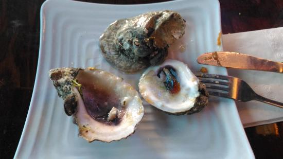 hmmmm picture of the siesta key oyster bar sarasota tripadvisor rh tripadvisor com sg