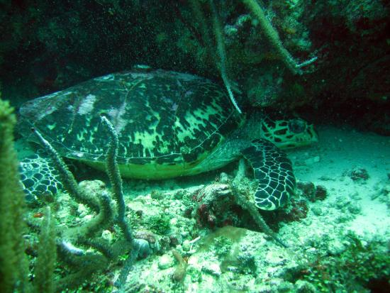 Extra Divers Tobago, Speyside : Saw a couple turtles.