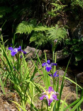 Whangarei Quarry Gardens: photo2.jpg