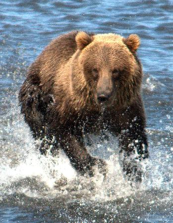 Kodiak Wildlife Tours