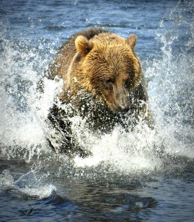 Kodiak Wildlife Tours: Chasing Salmon