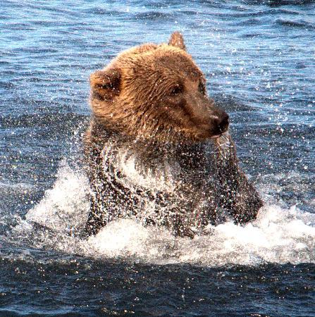 Kodiak Island Van Tours: Snow Bear