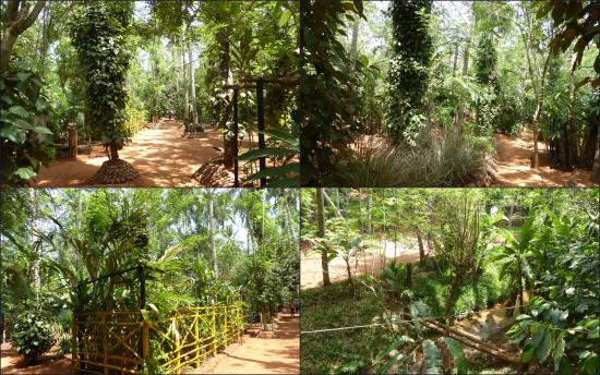 Regent Spice and Herbal Garden - Matale