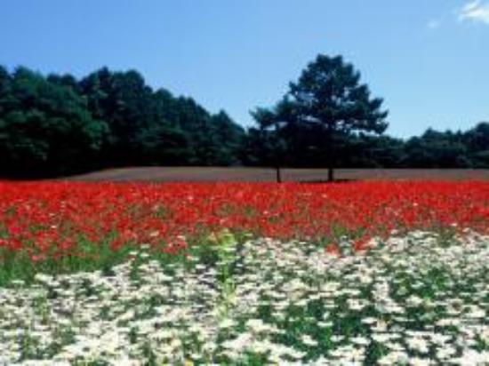Kiyosato Flower Park