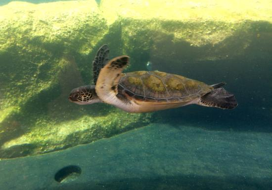 Ocean Activities Center: photo0.jpg