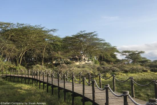 Hatari Lodge: Walkway onto the forest clearing