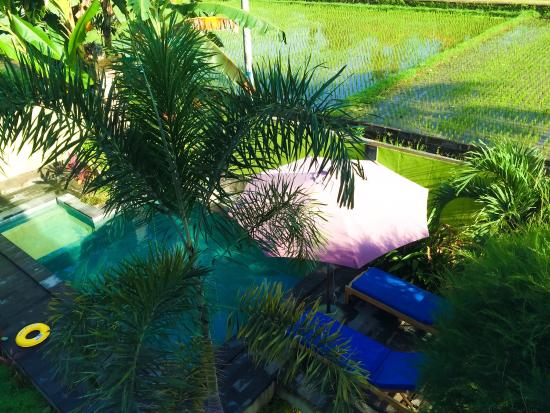 Yuliati House 2 is a private villa in Ubud you can easily rent. It is affordable and you'll wake