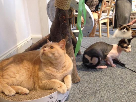 Cat Cafe Edinburgh Reviews