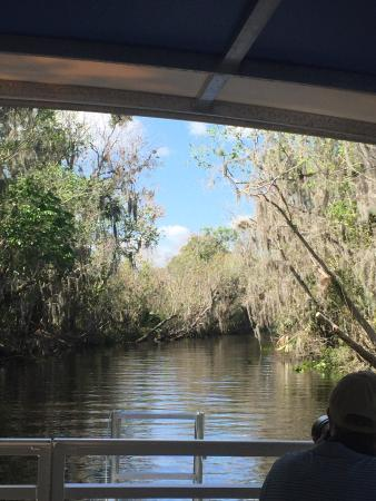 DeLand, FL: Great tour tons of birds, turtles, and gators