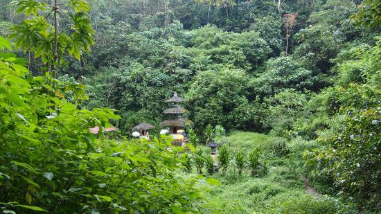 Danau Tamblingan Picture Of Bali Jungle Trekking Private Day