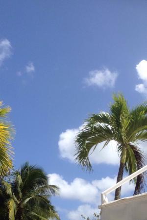 Nid tropical