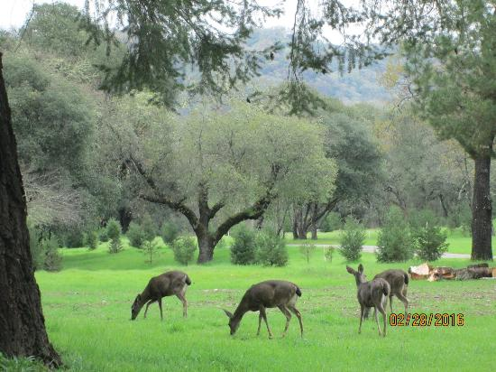 The City of Ten Thousand Buddhas: Deer and other animals roam freely and unafraid