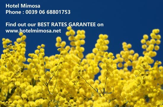 Hotel Mimosa: Happy