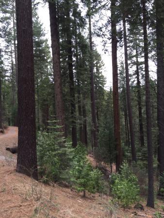 Arnold Rim Trail: photo2.jpg
